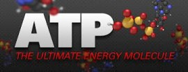 Fueling Your Workout ATP