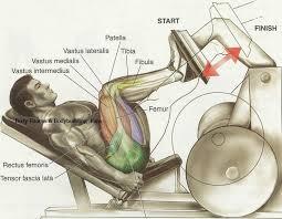 Leg Press Vertex Fitness Personal Training Studio